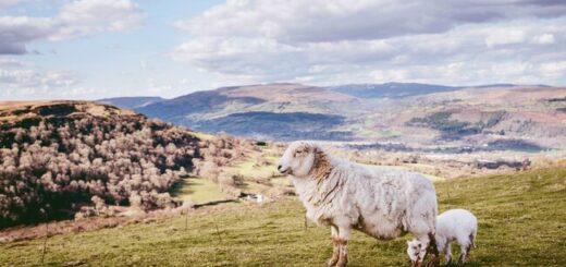 Wales Highlights erwandern Gruppenreise 2020/2021 Wales