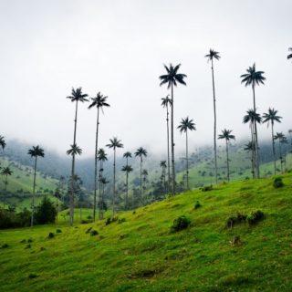 Kolumbien - Die höchsten Palmen der Welt 2021 | Erlebnisrundreisen.de