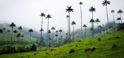 Kolumbien - Die höchsten Palmen der Welt 2021   Erlebnisrundreisen.de