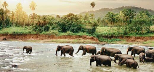 Sri Lankas Highlights erleben Gruppenreise 2020/2021 Horton-Plains-Nationalpark