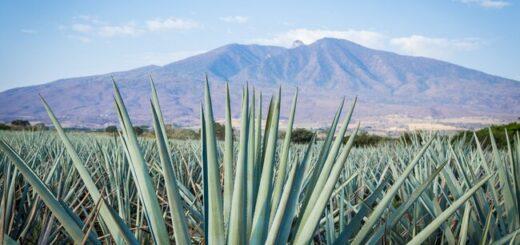 Mexiko Natur Pur Gruppenreise 2020/2021