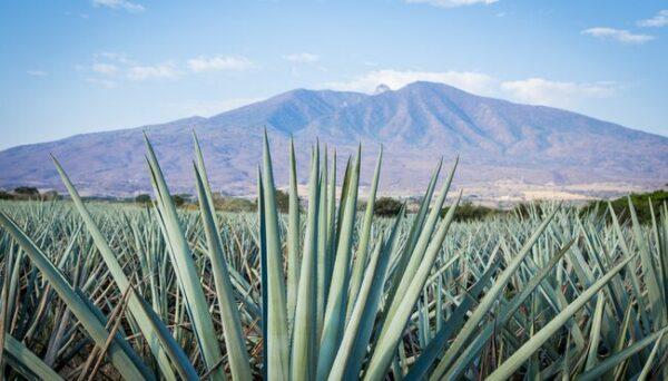 Mexiko Natur Pur