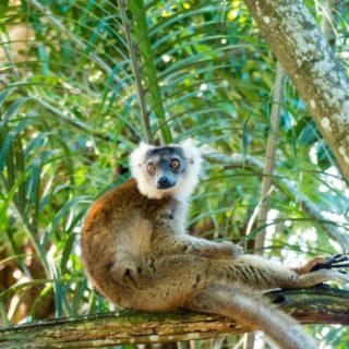 Madagaskar Lemur entspannt auf Baum 2021 | Erlebnisrundreisen.de