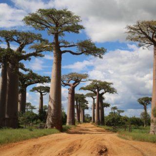 Baobab Allee 2021 | Erlebnisrundreisen.de