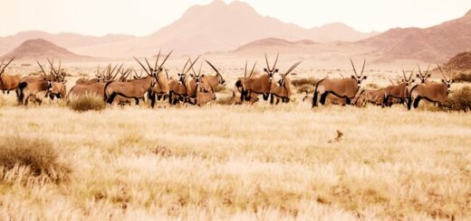 Namibias Highlights erwandern Gruppenreise 2020/2021 Swakopmund