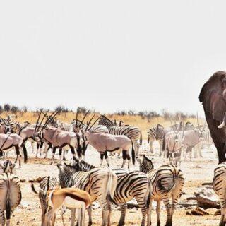 Namibias Highlights erleben Gruppenreise 2020/2021 Swakopmund