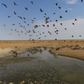 Wasserloch im Etosha-Nationalpark 2021 | Erlebnisrundreisen.de