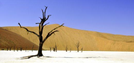 Dead Vlei Namibia 2021 | Erlebnisrundreisen.de