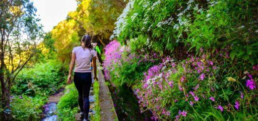 Madeira für Singles und Alleinreisende Gruppenreise 2020/2021 Madeira