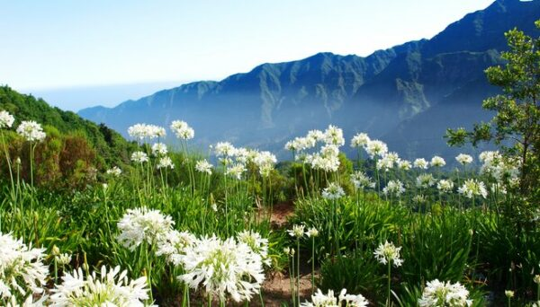 Madeira 8sam erwandern