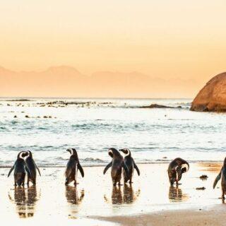 Südafrikas Highlights erleben Gruppenreise 2020/2021 Johannesburg