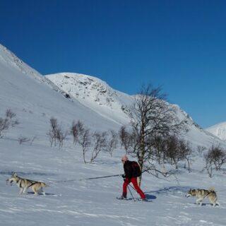 Weihnachten mit Huskies im Schnee Gruppenreise 2020/2021