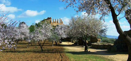 Mandelblüte bei Agrigento - Alba Incoming
