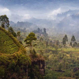 Teeplantagen im Bergland von Nuwara Eliya 2021   Erlebnisrundreisen.de