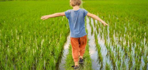 Kind in Reisfeld 2021 | Erlebnisrundreisen.de
