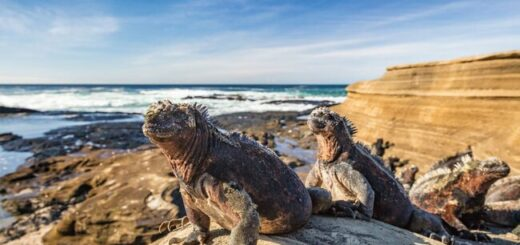 Anden und Galapagos naturnah entdecken Gruppenreise 2020/2021