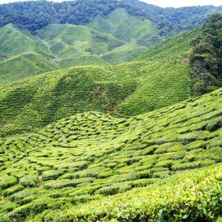 Sri Lankas Highlights erwandern Gruppenreise 2020/2021 Polonaruwa