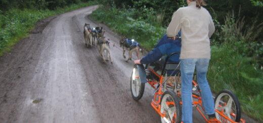 Husky Trainingswochen Gruppenreise