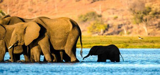 Rundreise Botswana, Namibia und Simbabwe 2021 / 2022 | Erlebnisrundreisen.de