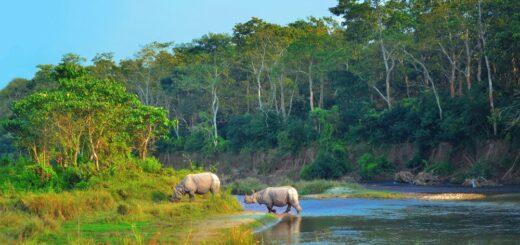 Panzernashörner im Chitwan-Nationalpark 2021 | Erlebnisrundreisen.de