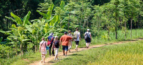 Kurze Wanderung entlang der Reisfelder