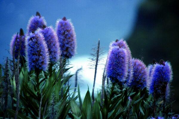 Madeira-Das-immergruene-Wanderparadies-3