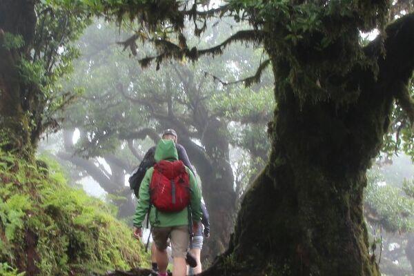 Madeira-Das-immergruene-Wanderparadies-9