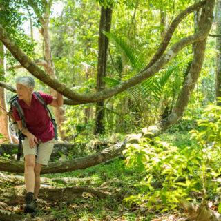Entdeckertour durch den Regenwald - Dominik Ketz