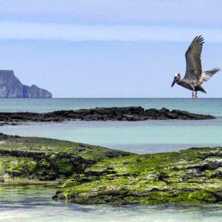 Einzigartige Tierwelt auf Galápagos