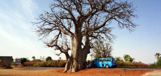 unser Bus am Baobab-Baum Reise unser Bus am Baobab-Baum 2021/2022