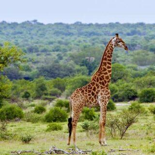 Alle großen Höhepunkte Südafrikas; kleine Reisegruppe mit maximal 15 Teilnehmern