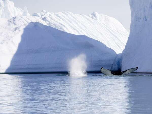 Grönland-Island Erlebnisreisen Sonderreise 2022 | Erlebnisrundreisen.de