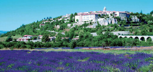 Lavendelfelder in der Provence - Ailleurs Cultures