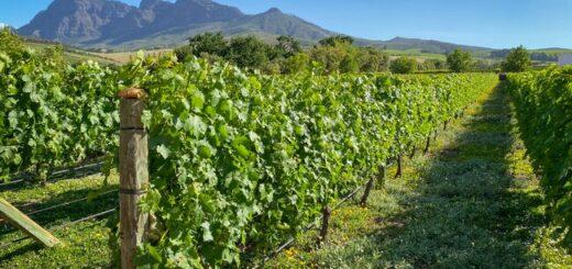 Südafrika - der Wein Trail Gruppenreise 2021/2022
