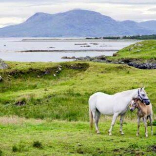 Irland deutschsprachig gefuehrte Studienreisen 2022  | Tinta Tours Erlebnisreisen