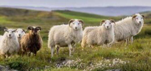 Island deutschsprachig gefuehrte Studienreisen 2022  | Tinta Tours Erlebnisreisen