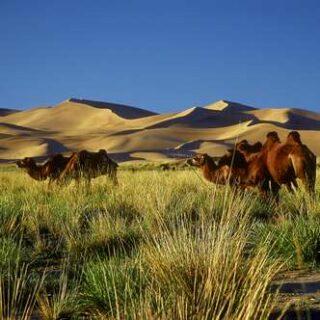 Mongolei deutschsprachig gefuehrte Studienreisen 2022  | Tinta Tours Erlebnisreisen