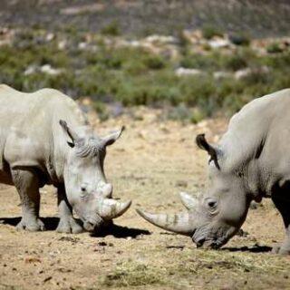 Namibia deutschsprachig gefuehrte Studienreisen 2022  | Tinta Tours Erlebnisreisen