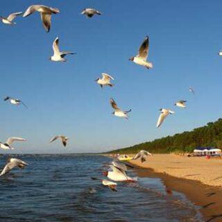 Polen – Litauen deutschsprachig gefuehrte Studienreisen 2022    Tinta Tours Erlebnisreisen